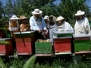 O comunitate organizată - viaţa albinelor